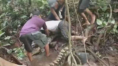 Clip ngư dân hợp sức cứu người đàn ông bị trăn khổng lồ siết chặt