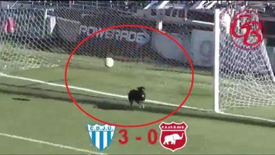 Chó cưng của CĐV bứt xích, lao xuống sân cản phá một pha bóng không thể xuất thần hơn