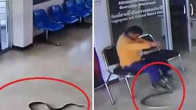 Phản ứng bất ngờ của người đàn ông khi bị rắn bò vào đồn cảnh sát tấn công