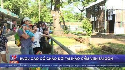 Hươu cao cổ chào đời tại Thảo cầm viên Sài Gòn