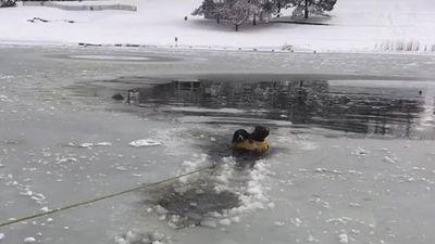 Lính cứu hỏa liều mình lao xuống hồ băng giải cứu một con chó