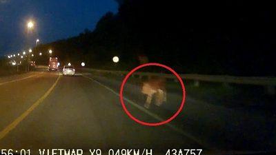 Clip: Con bò đột ngột xuất hiện trên đèo lúc trời tối khiến tài xế ô tô thất kinh
