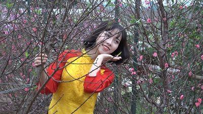 Hoa đào Nhật Tân khoe sắc sớm, du khách chen chân, xếp hàng để chụp ảnh