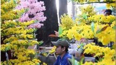 CLIP: Hoa đào, hoa mai giả giá 'cắt cổ' vẫn đắt khách ngày Tết