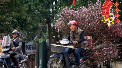 Ảnh chế Công Phượng, Quang Hải về quê bán đào Tết gây sốt