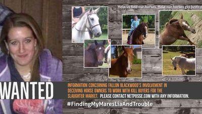 Nữ sinh viên thú y cứu chục con ngựa và sự thật kinh khủng