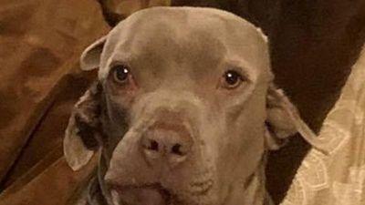 Kỳ lạ cô chó có miệng mọc ra từ tai