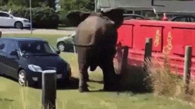 Phát hoảng khi động vật 'nổi điên' tấn công con người
