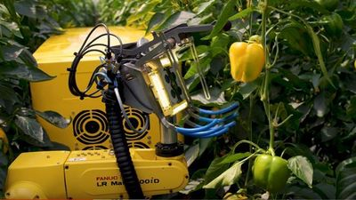 Thích thú trước cảnh robot thu hoạch ớt chín trong nhà kính