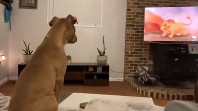 Chó cưng 'khóc' khi xem đoạn phim cảm động của 'Vua Sư Tử'