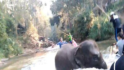 Voi rừng nổi điên, húc lật thuyền du khách tại Thái Lan