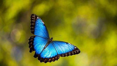 Vì sao các loài động vật không có màu xanh dương?