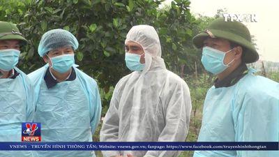 Xuất hiện thêm ổ dịch tả lợn châu Phi mới tại Nam Định