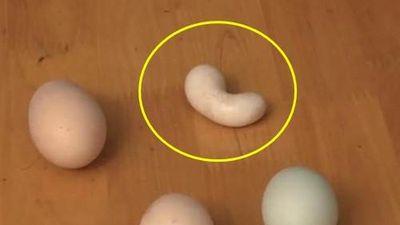 Lý giải bí ẩn gà đẻ ra trứng hình hạt đậu