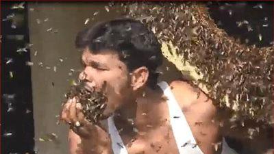 CLIP: 'Choáng' người đàn ông bỏ cả đàn ong sống vào miệng