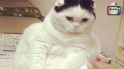 Vẻ hài hước đáng yêu khi những chú mèo hờn dỗi cả thế giới