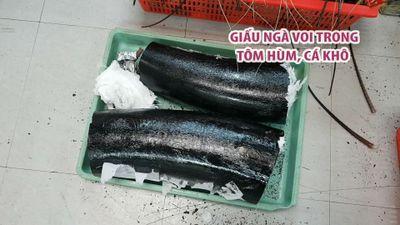 Thủ đoạn giấu ngà voi trong tôm hùm, cá khô mang chuyển từ Mỹ về Việt Nam