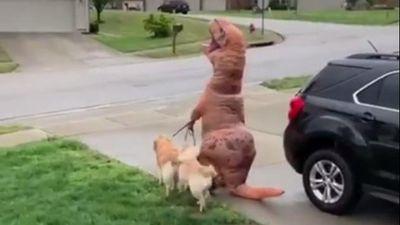 Giật mình với cảnh 'khủng long' dắt cún cưng đi dạo phố