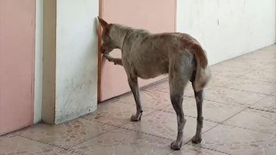Chú chó trung thành chờ đợi người bạn đã qua đời ở Philippines