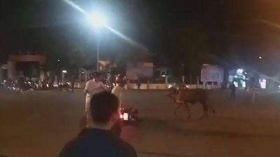 Bò 'điên' gây náo loạn trên phố, húc nhiều người bị thương