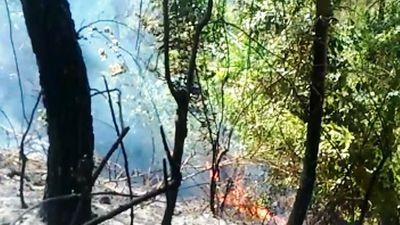 Cháy rừng thông hàng chục năm tuổi ở Nghệ An