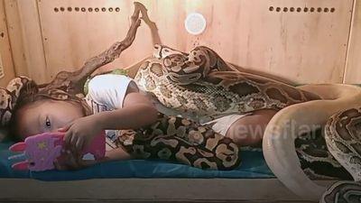 Clip: Khiếp đảm cảnh bé gái ở Indonesia chơi với trăn khổng lồ, vô tư đánh răng cho cá sấu