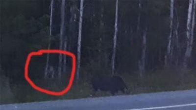 Phát hiện 'quái vật không mặt' rình rập săn thú rừng