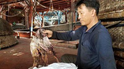 Gần 1.000 tấn khô mực ở Quảng Nam bít đường sang Trung Quốc