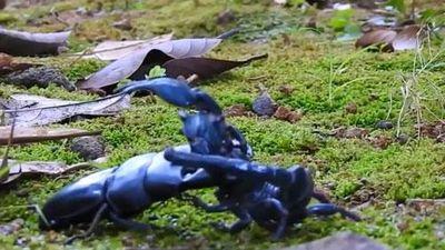 Clip: Bọ cạp đại chiến bọ cánh cứng và cái kết