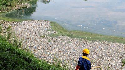 Cá chết trắng hồ Công viên Yên Sở, mùi hôi tanh bốc lên nồng nặc
