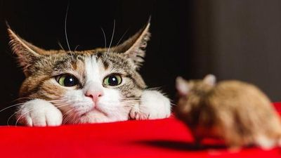 Giải câu đố logic để tìm ra nơi ở của chuột và mèo
