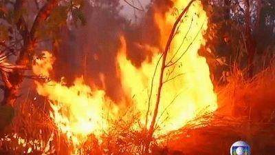 Rừng Amazon cháy lớn, khói phủ đen bầu trời nhiều thành phố Brazil