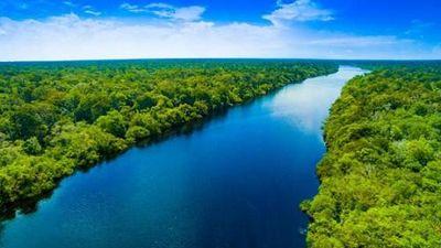 Bật mí thú vị về rừng mưa Amazon có thể bạn chưa biết