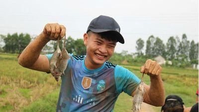 Săn chuột đồng làm 'đặc sản' ở Nghệ An