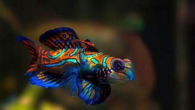 CLIP: Top 10 loài động vật đẹp nhất thế giới