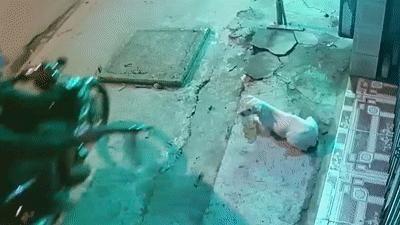 Hai thanh niên dùng súng điện trộm chó trong tích tắc