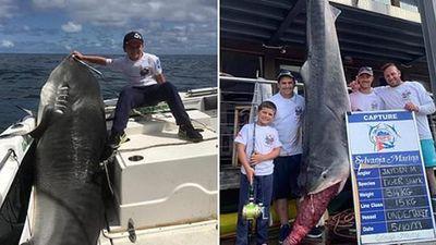 'Choáng' bắt được cá mập 'khủng' nghi thành tinh nặng hơn 314kg