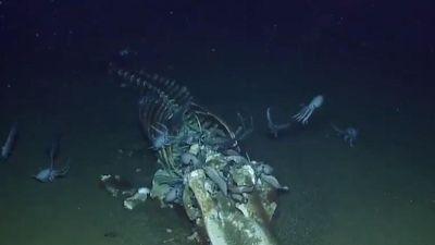Video livestream xác cá voi dưới biển gây xôn xao trên mạng