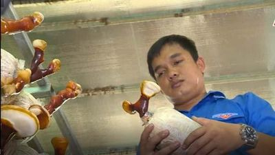 TP.HCM: 9x thu tiền tỷ từ nghề trồng nấm