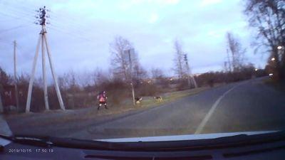 Tài xế nhanh trí bẻ lái giải cứu kịp thời bé gái khỏi bầy chó hoang