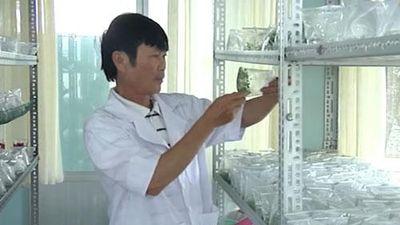 Lão nông Lâm Đồng kiếm tiền tỷ nhờ ươm giống nuôi cấy mô