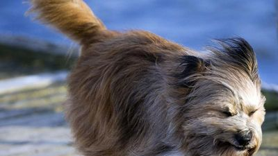 Hài hước khoảnh khắc động vật 'mất mặt' vì gió to