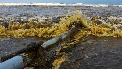 Nước biển Quảng Ngãi đổi màu đen như cà phê