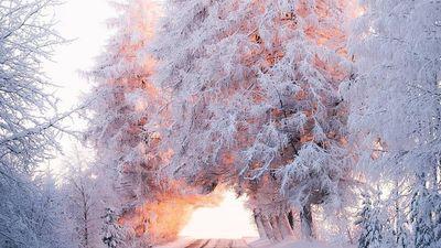 Băng qua đại lộ dẫn tới thiên đường mùa đông