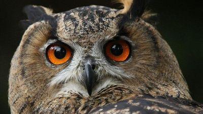 Tại sao mắt động vật phát sáng vào ban đêm?