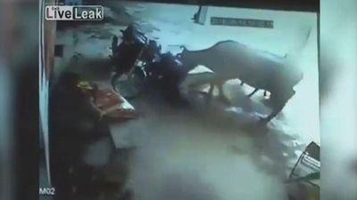 Bò nổi điên tấn công 2 kẻ cầm dao đâm cô gái trẻ