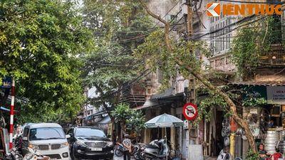 Phố nào cung cấp cá cho cả 36 phố phường Hà Nội xưa?
