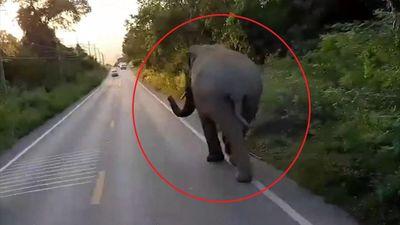 Chú voi gây sự với ôtô trên đường