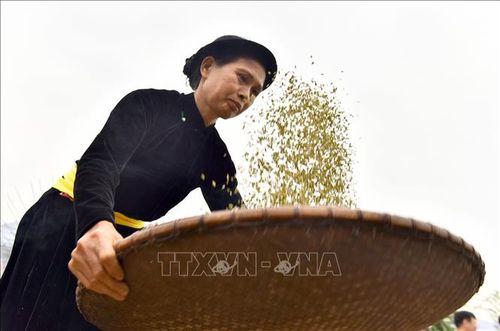 Đặc sắc lễ hội giã cốm ở vùng cao Tuyên Quang