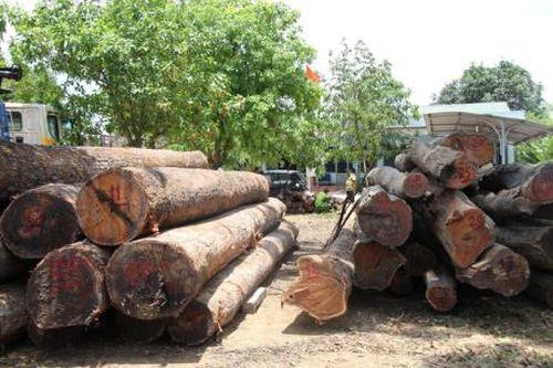 Điện Biên: Đối tượng chở gỗ lậu lao xe vào lực lượng chức năng
